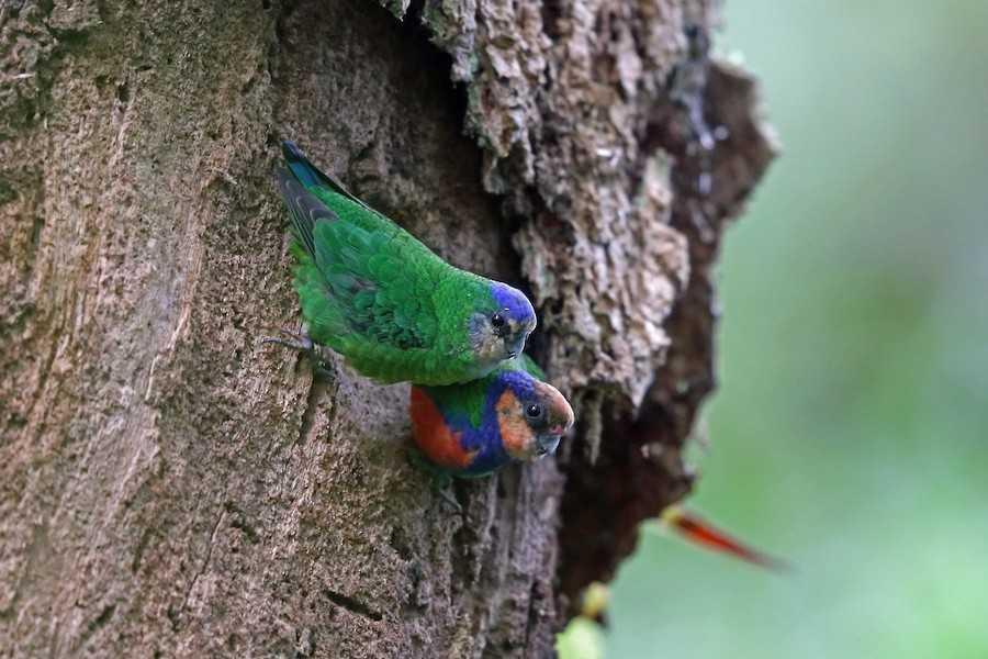 Дятловые птички на дереве