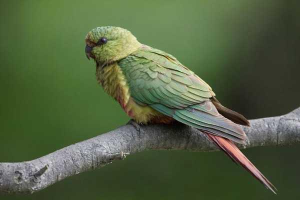 Изумрудный вид птичек