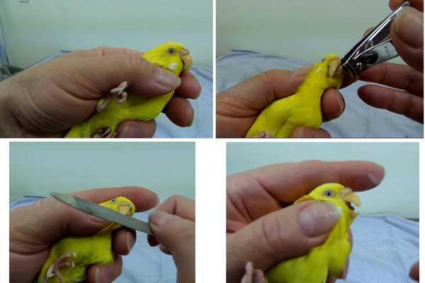 инструкция как подрезать роговой слой