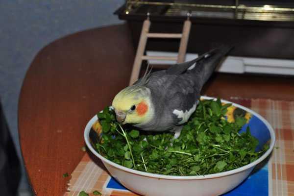 птица купается в зелени