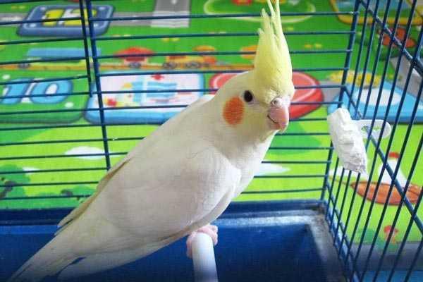 птица в вольере