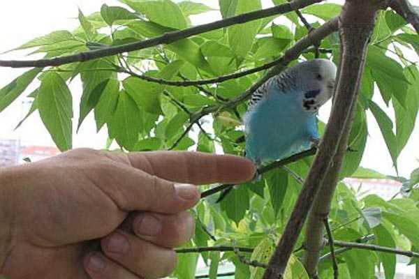снимать с дерева улетевшую птицу