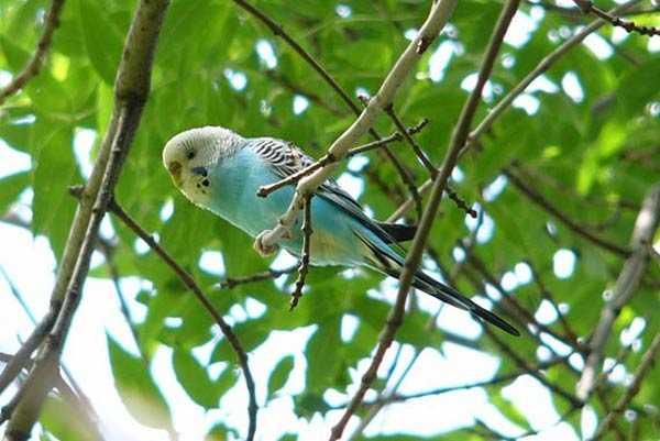 попугай улетел и сидит на ветке дерева