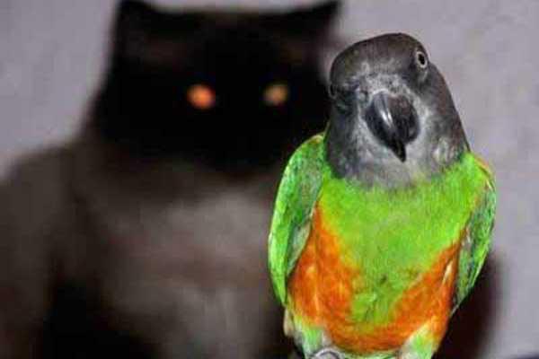 фото сенегала попугая и кота