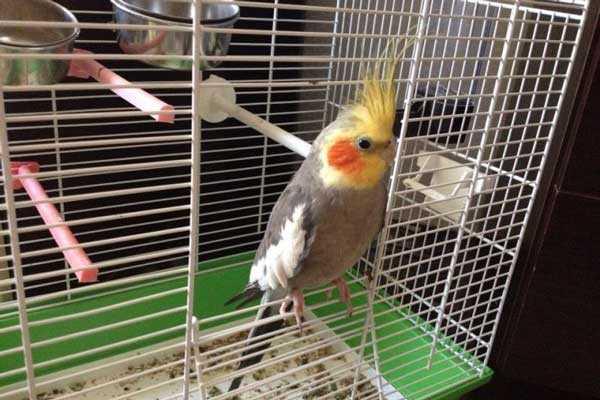 дом с попугаем