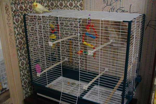 большой домик для птички