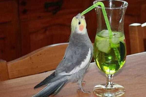 корелла пьет с бокала напиток