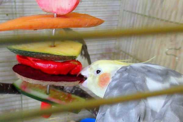 птица ест овощи