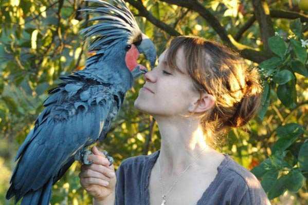 Пальмовый какаду сидит на руке девушки
