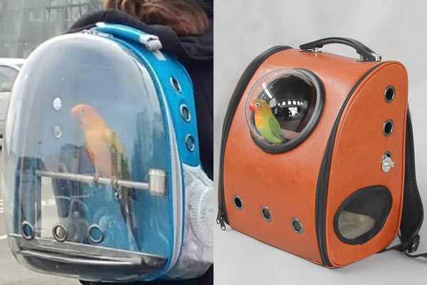 рюкзаки для птичек