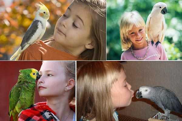 какую птицу завести ребенку