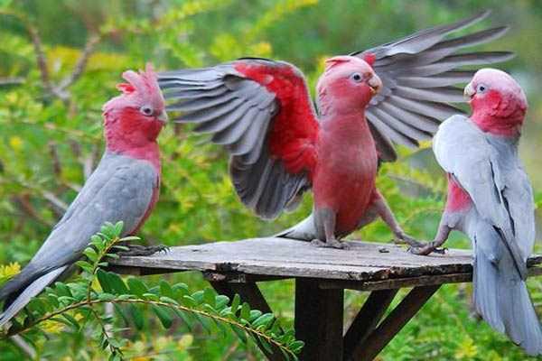 розовые птицы общаются