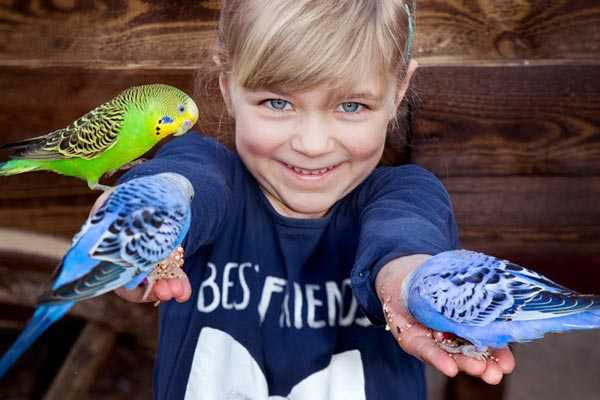 волнистые попугайчики и ребенок