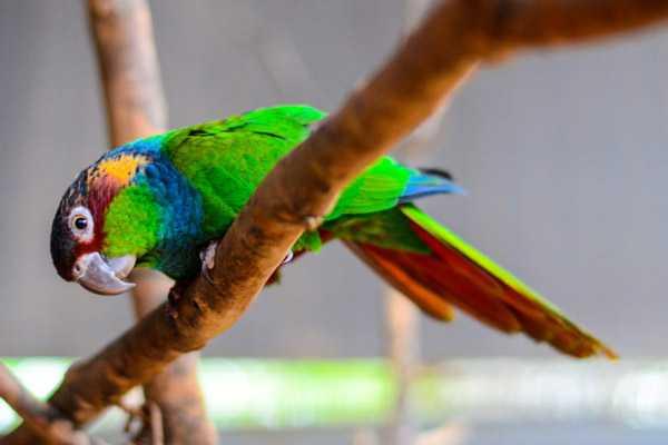 яркая птичка сидит на ветке