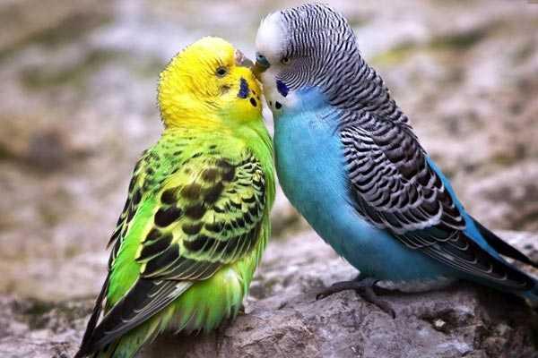 самец и самка целуются