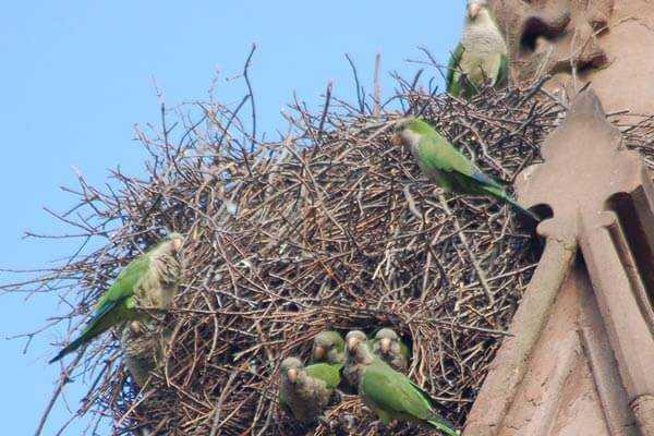 гнездо калита