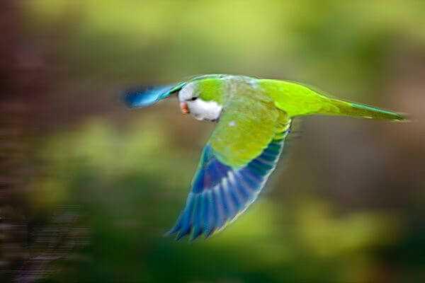полет квакера калиты