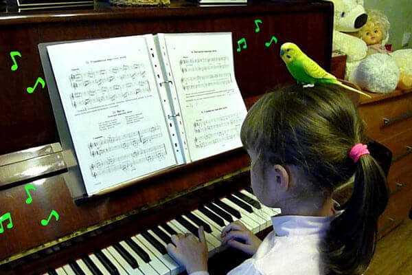 музыка для попугаев